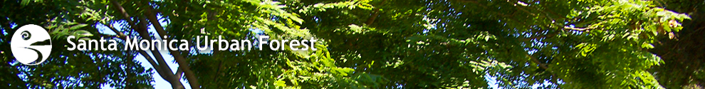 Urban Forest Header 02