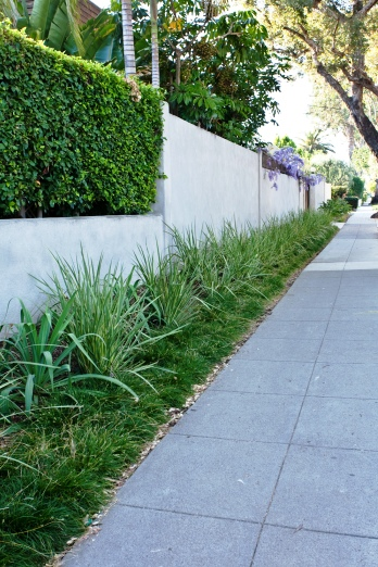 A mix of low water use grasses frame this stucco fence.