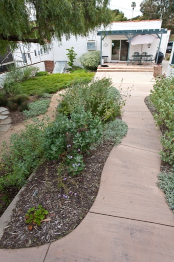 This back yard features a pathway lined by herbs, a lawn of Carex, and a small veggie garden, and incorporated the owner's mature pepper tree.