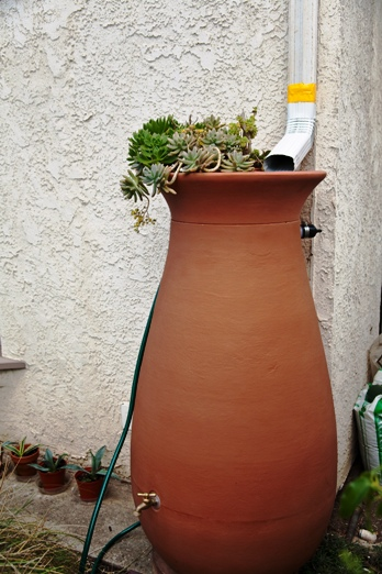 Rain barrels are a simple way to capture rain to water potted plants or the garden.