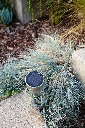 Solar powered garden lights are a great way to light a walkway and save energy.