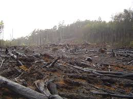 Deforestation_2