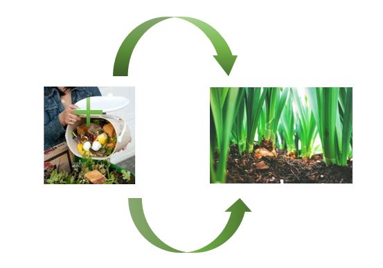 compost image 2.0