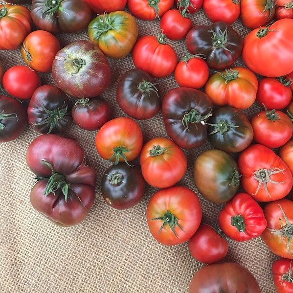 Golden_State_Tomatoes